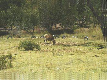 Terreno en Huanta